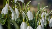 Florales 19