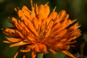 Florales 26