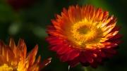 Florales 3