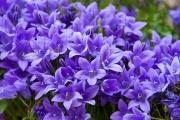 Florales 6