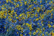 Hä, blau und gelb? (2015)