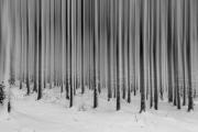 Winterstangen