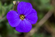 Florales 30