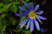 Florales 31