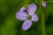 Florales 33