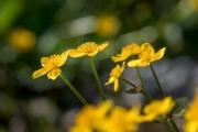 Florales 39