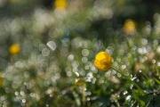 Florales 41