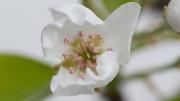Florales 5