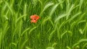 Florales 8