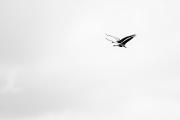 Twin Flight