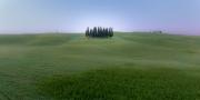 Cipressi di San Quirico 1