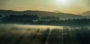 Misty Morning (2012)