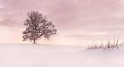 Winter Tree (2019)